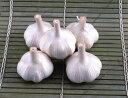 【球根・にんにく】 青森県産ホワイト6片にんにく 球根 2球 (植え付け時期11月上旬)