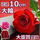 バラ1本BOX(バラ花束)誕生日 結婚記念日のプレゼントに妻へ。プロポーズに1輪(一輪 一本)の大輪の薔薇(ばら)をギフトに 送料無料