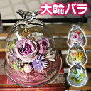 プリザーブドフラワー誕生日や結婚記念日、退職祝いのプレゼントや、ペットの御供えに小鳥のガラスドームに大輪バラ(薔薇)のアレンジをガラスケースのプリザをギフトに 送料無料 〜Chirping Flower〜