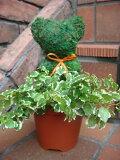 モスアニマル 寄せ植え グリーン スタンド プランター カップガーデニング ガーデン ギフト テラコッタ【花遊び】プチ!モスアニマル♪クマさん【4月中旬のお届け予定です】