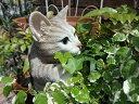 ガーデニング ガーデン ネコ アニマル プランター寄せ植え ハンギング 雑貨 【花遊び】『ハンギング!キャット・アメショ』