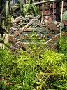 フェンス アイアン ガーデニング ミニフェンス 柵ガーデン アンティーク【花遊び】『ガーデンカラフルフェンス・F』