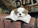雑貨 ガーデニング ガーデン ドッグ アニマル【花遊び】『BOOK シーズー』【2月下旬のお届け予定です】