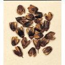 【ドライ】大地農園/バクリ 100gN/24350-000【02】《 プリザーブドフラワー 花材ナッツ(木の実)&フルーツ木の実 》