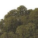 【プリザーブド】ノルディックモス 50g オリーブグリーン 50g/FL820-78【02】《プリザーブドフラワー 花材 モス、コケ その他のモス、コケ等》