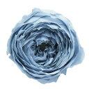 【プリザーブド】大地農園/ローズ てまり ミストブルー 8輪/02460-671【01】【01】【取寄】《 プリザーブドフラワー プリザーブドフラワー花材 バラ(ローズ) 》