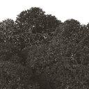 即日★【プリザーブド】フロールエバー/ノルディックモス 50g ブラック 50g/FL820-890《 プリザーブドフラワー プリザーブドグリーン モス・苔 》