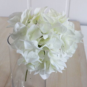 アリスハイドレンジア クリーム ホワイト アジサイ ハイドランジア