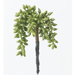 サッカレンテン グリーン 多肉植物 プランツ