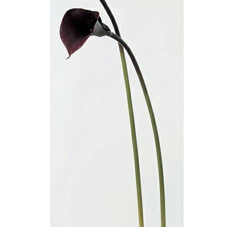 【造花】アスカ/カラーリリィ アンティークパープル/A-39480-7E【01】【取寄】《 造花(アーティフィシャルフラワー) 造花 花材「か行」 カラー 》