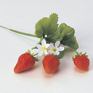 ストロベリー フルーツ