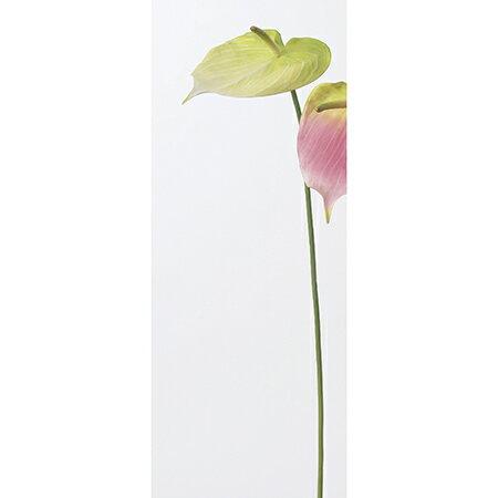 【造花】アスカ/アンスリウム クリームグリーン/...の商品画像
