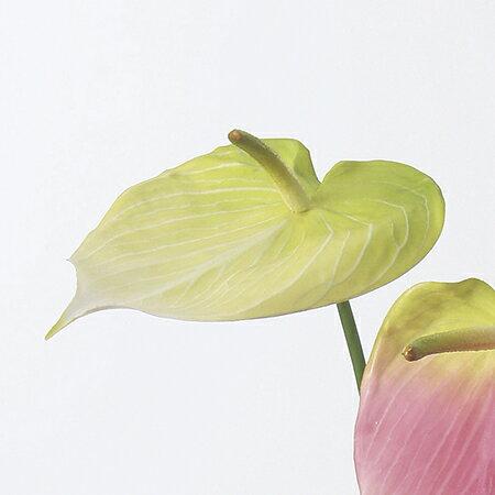 【造花】アスカ/アンスリウム クリームグリーン...の紹介画像2
