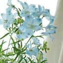 【生花】デルフィニューム プラチナブルー(水色スプレー)50cm程度::[10本]