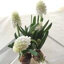 【生花】ムスカリ球根つき 白ホワイトマジック【FJ】:ユナイテッドフラワーファーム[10本]