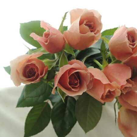 【生花】バラ ジュリア(茶)::小ぶり品種[10本]