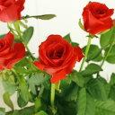 【生花】バラ パサディナ 【OT】[5本]