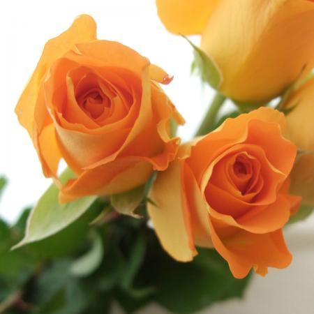 【生花】バラおまかせ 60cm以上指定[オレンジ][10本]