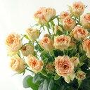 【生花】SPバラ アンティークレース[10本]