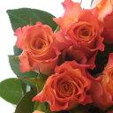 【生花】ケニアローズ マリヨ、マリークレアなど(オレンジ)60センチ[10本]
