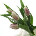 【生花】チューリップ フレミングフラッグ(紫×白)一重:[10本]