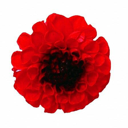 【プリザーブド】Vermont/ジャノメダリア フェニックス 12輪/53【01】【取寄】《 プリザーブドフラワー プリザーブドフラワー花材 ダリア 》