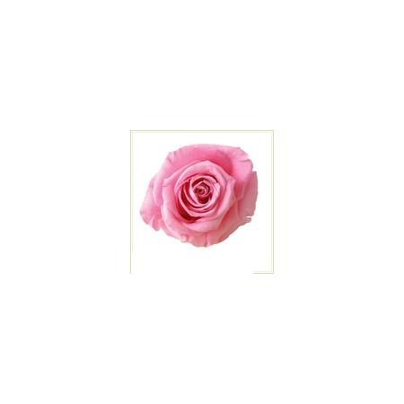 【プリザーブド】ヴェルディッシモ/ステラローズ ブライダルピンク 6輪入り/56008【01】【取寄】《 プリザーブドフラワー プリザーブドフラワー花材 バラ(ローズ) 》