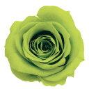 即日★【プリザーブド】大地農園/ローズ いずみ 9輪 ライトグリーン/03480-721【00】《 プリザーブドフラワー プリザーブドフラワー花材 バラ(ローズ) 》