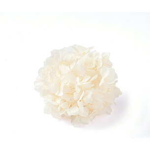 プリザーブド 東北花材 あじさい ホワイト プリザーブドフラワー アジサイ