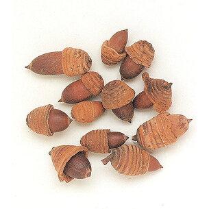 東北花材 ドングリ ナチュラル プリザーブドフラワー フルーツ