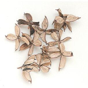 東北花材 ナチュラル プリザーブドフラワー フルーツ