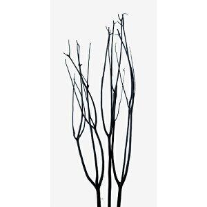 東北花材 ミツマタ ブラック プリザーブドフラワー