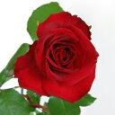 特選・深紅のバラ(赤いバラ)の花束 1本