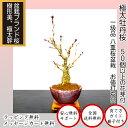 盆栽 桜 牡丹桜盆栽 極太幹の大輪花 樹齢3年 八重桜盆栽 八重咲き【50個以上の蕾をつけた八重桜盆