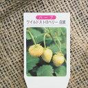 ハーブ 苗 5株セットワイルドストロベリー(白実)