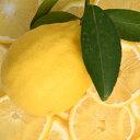 シードレス レモン 苗 【種無し レモン】 3年生 接ぎ木 大苗 種なし 檸檬 苗木 柑橘 香酸柑橘 柑橘苗木 果樹苗木 常緑