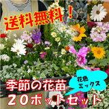 【】季節の花苗 花色ミックス20ポットセット★ただいま2苗増量の22ポットにてお届け!+肥料のプレゼント付【同梱難しい場合あります】★花壇・寄せ植えに旬の花を