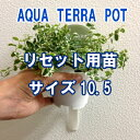 ●st【観葉】アクアテラポットリセット用苗10.5サイズ全10種よりお選び下さい