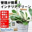●st【観葉】アクアテラポットブリキ10.5(シルバー)全10種【ギフト】