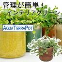 ●miuアクアテラポット ヴェインボウル10.5タイプ 全10種 シュガーバイン アイビー ペペロミアなど 【ギフト】