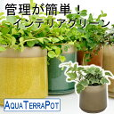 インテリアグリーン アクアテラポット ヴェインスプレッド10.5タイプ 全10種 ギフト 底面給水 観葉植物 シュガーバイン アイビー ペペロミア