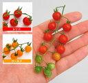 野菜苗 マイクロトマト マイクロビーズ 3号ポット自根苗(選択:レッドorゴールド)