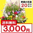 ◆【送料無料】季節の花苗 花色ミックス20ポットセット選べる花色