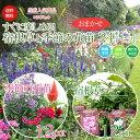 宿根草と季節の花苗おまかせ24ポットセット【送料無料】