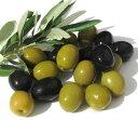 果樹苗 オリーブ  3号ポット 花色 黄 耐寒性 常緑 小高木 ガーデニング シンボルツリー おしゃれ 庭木 花木 インテリアグリーン 観葉植物
