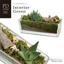 インテリアグリーン PDインテリア ID-106 ギフト 観葉植物 テラリウム 多肉植物 ガラス小物 シンプル スタイリッシュ ナチュラル インテリア雑貨