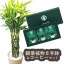 【あす楽】『ドラセナサンデリアーナ8号鉢+スターバックスコーヒーギフトセット』