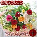【生花ギフト用オプション】かすみ草(霞草/かすみそう/カスミソウ)花束やアレンジメントの添え花に白いカスミ草をプラ…
