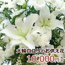 【送料無料 あす楽対応】【お供え 花】大輪の白ユリ(カサブラ...