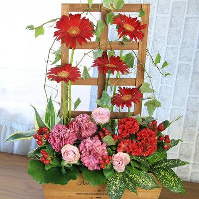 赤いガーベラの花が主役!高さのあるトレリスを使ったフラワーアレンジメント【誕生日や発表会、記念日のお祝いに/出産祝い、新築祝いに/送別会に/お見舞いに/退職祝い/卒業祝い/母の日】【送料無料】【あす楽配送】